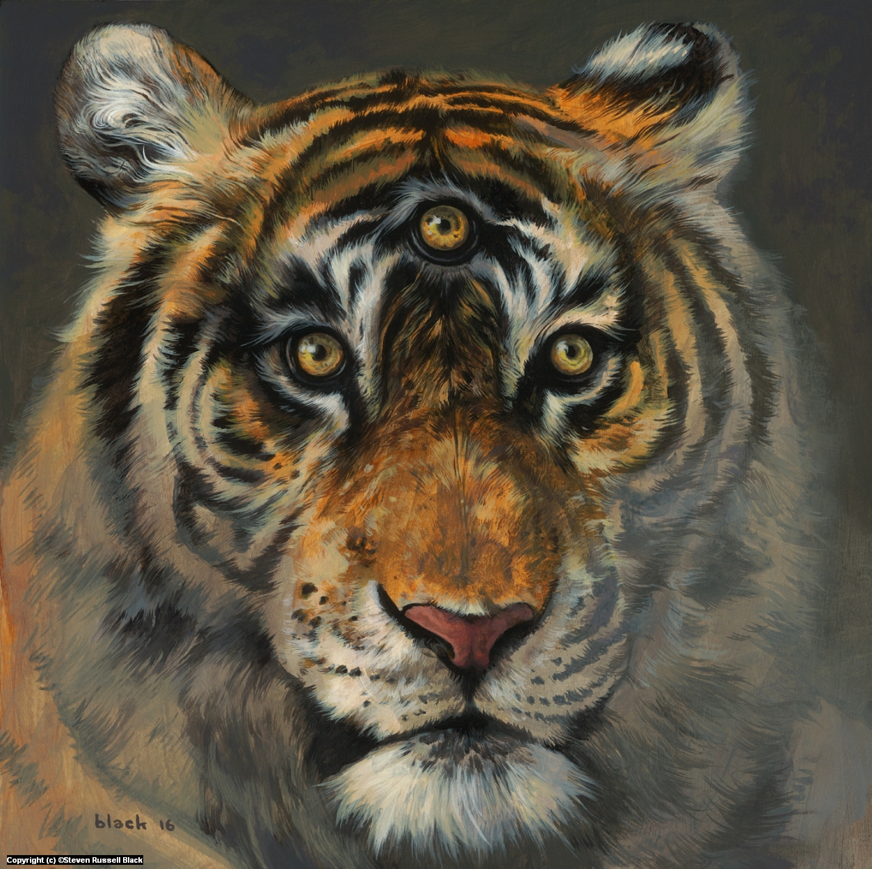 A Wise Tiger Artwork by Steven Black