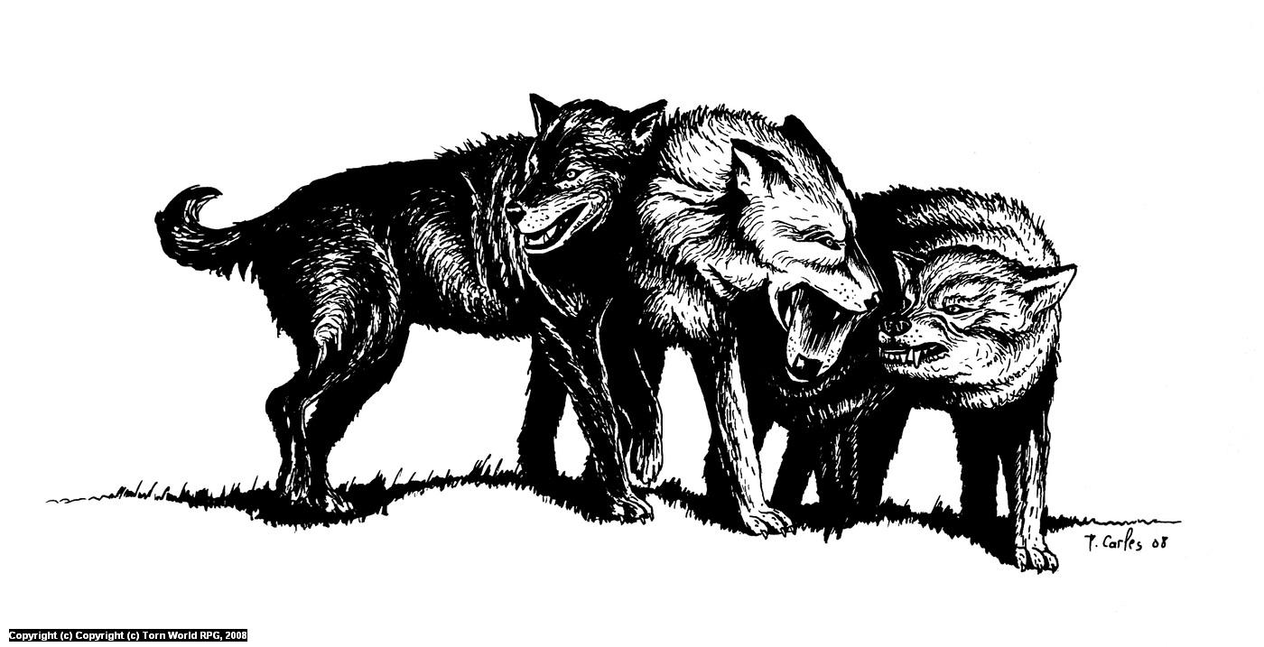 Fighting Wolves Artwork by Pierre Carles