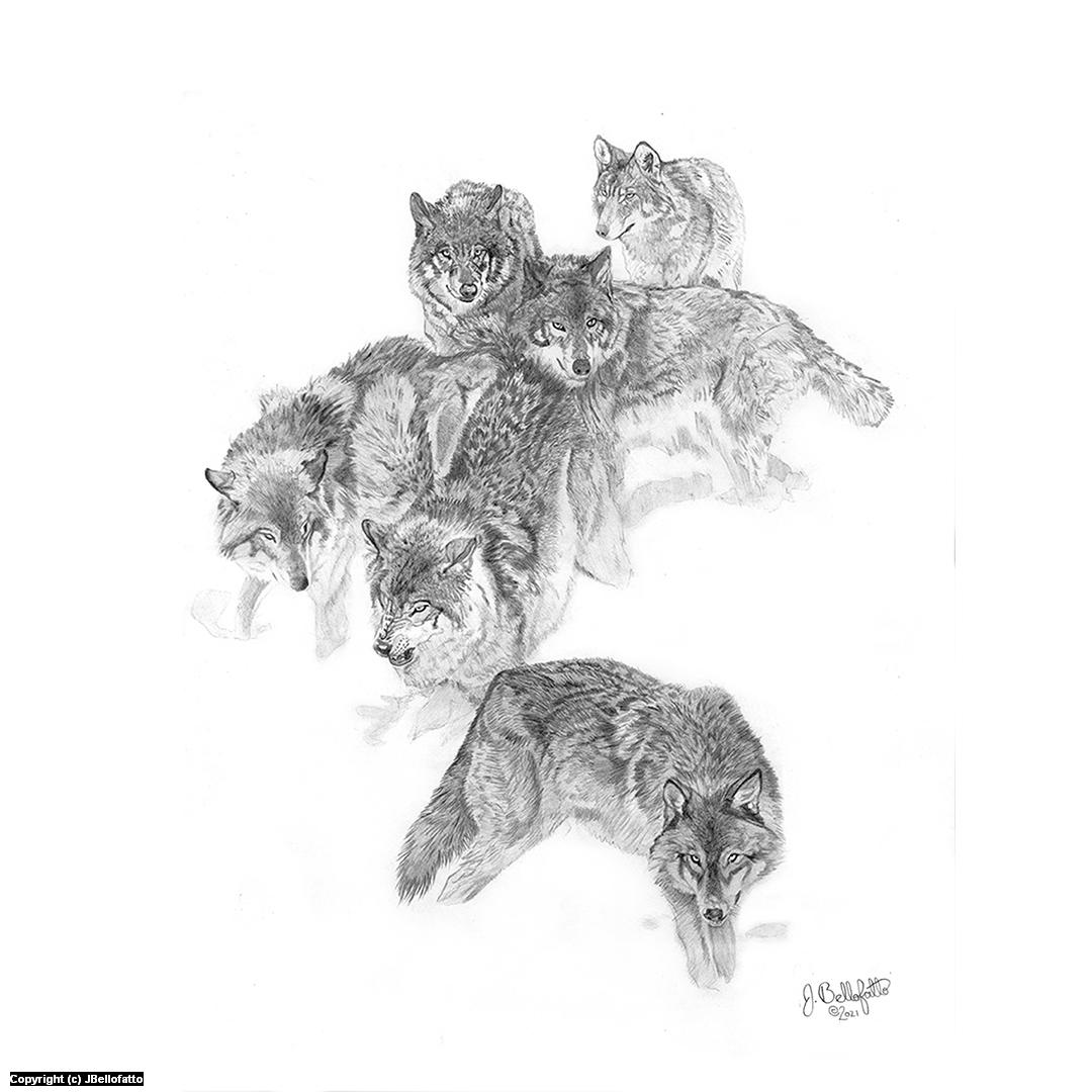 Wolf Pack Artwork by Joseph Bellofatto