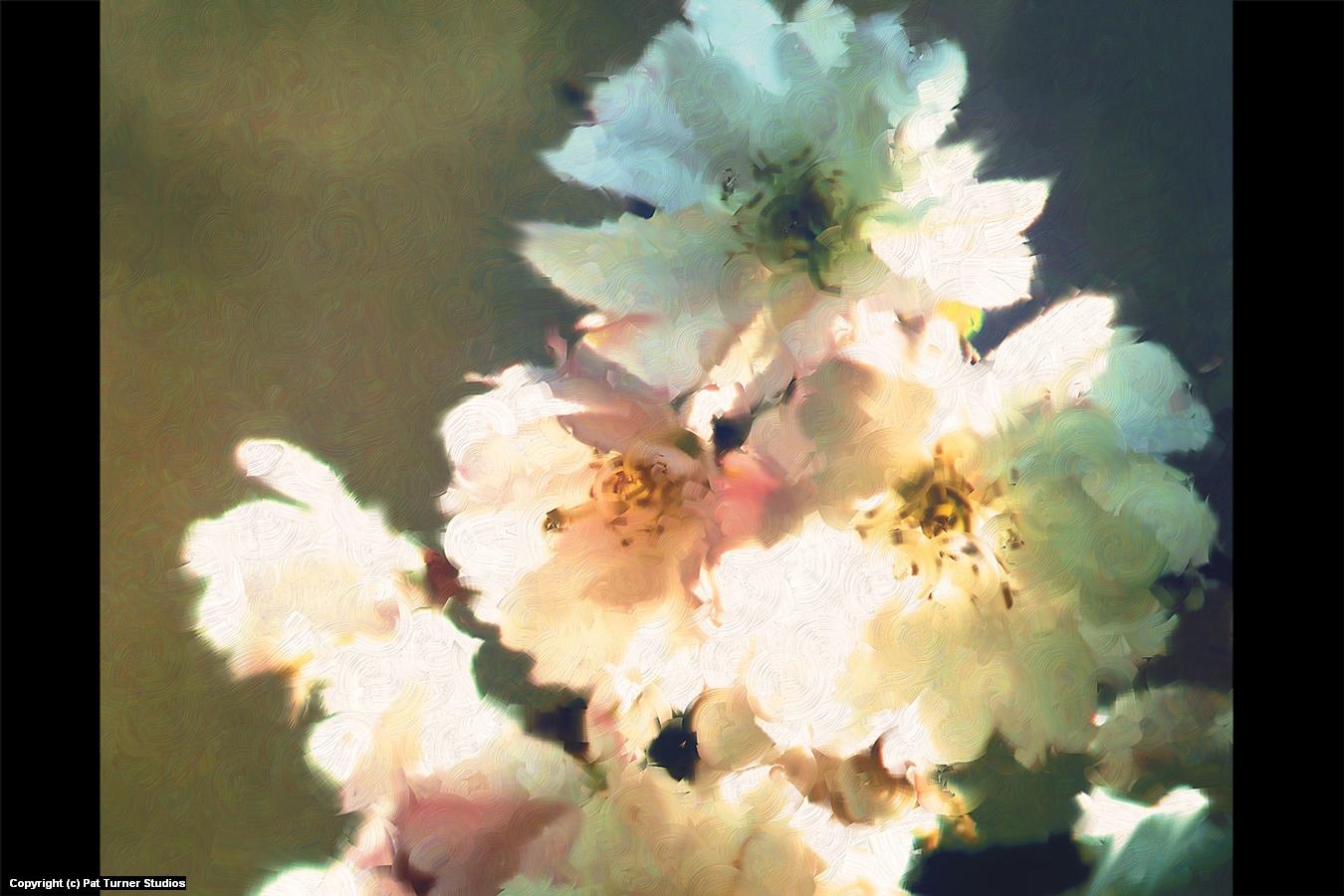 Cherry Zen Detail Artwork by Patrick Turner