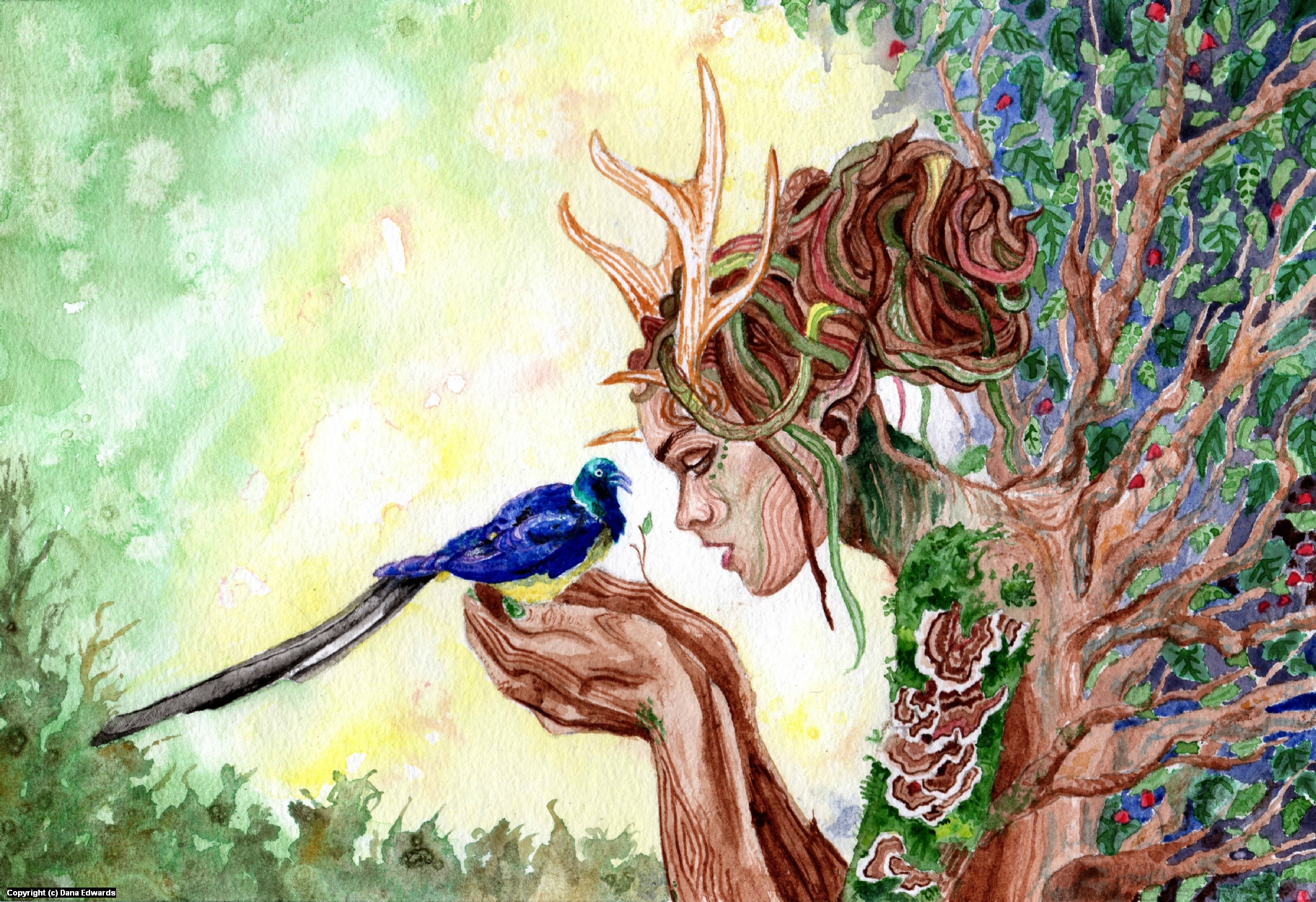 Dryad and Starling Artwork by Dana Edwards