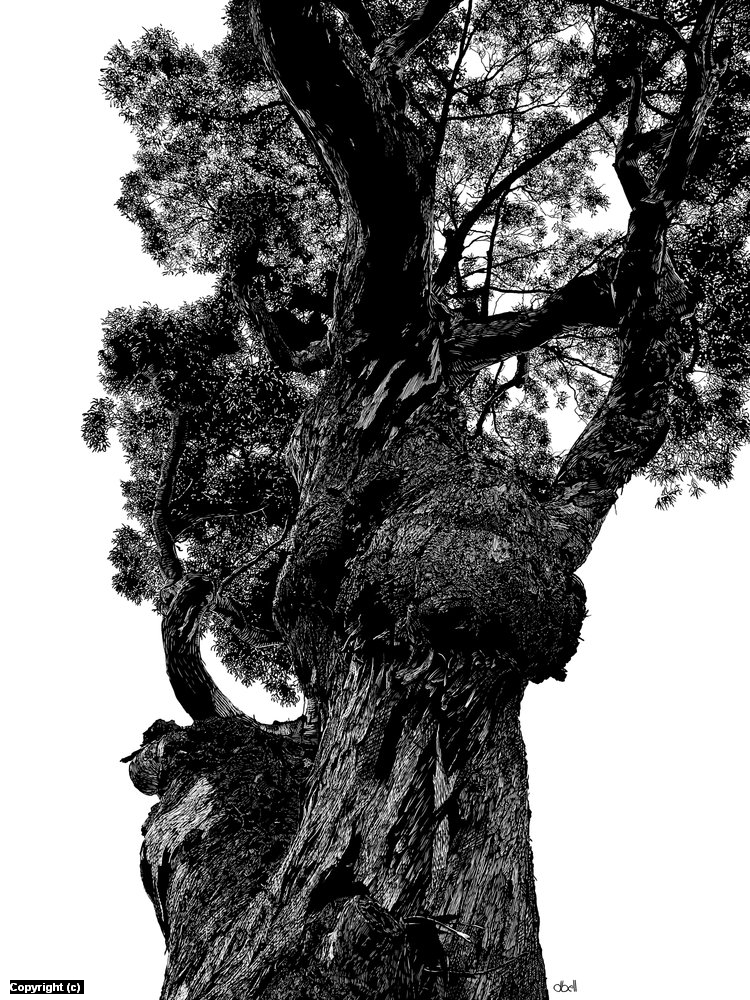 Big Sur Tree Artwork by Douglas Bell