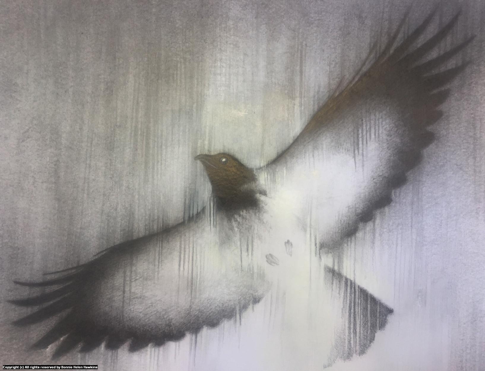 week 24 Artwork by Bonnie Helen Hawkins