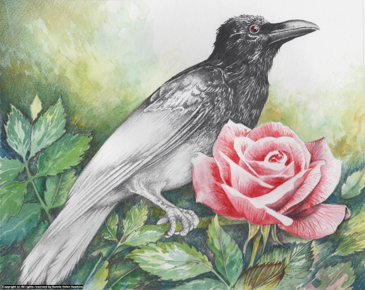 52 Crows Week 7 Artwork by Bonnie Helen Hawkins