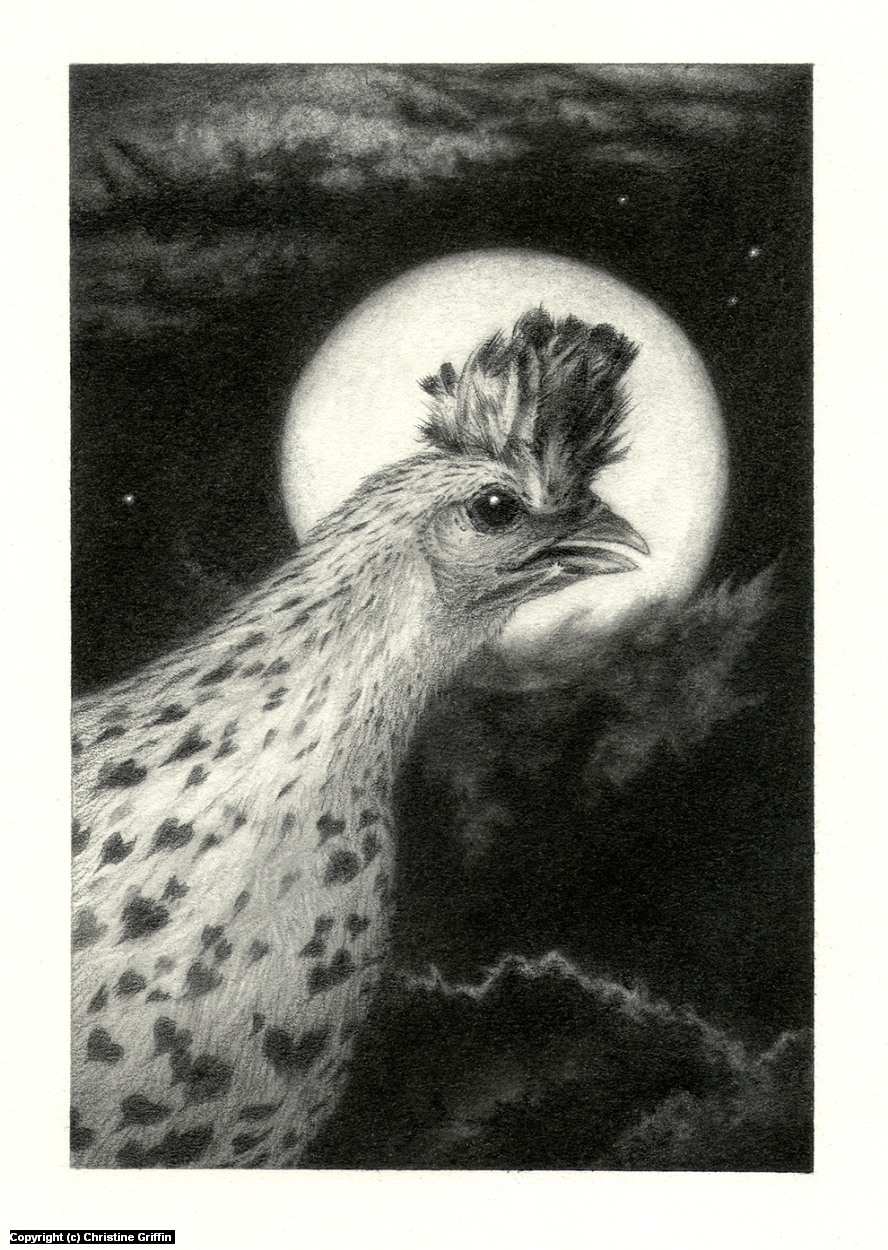 In the Night, Chicken Artwork by Christine Griffin
