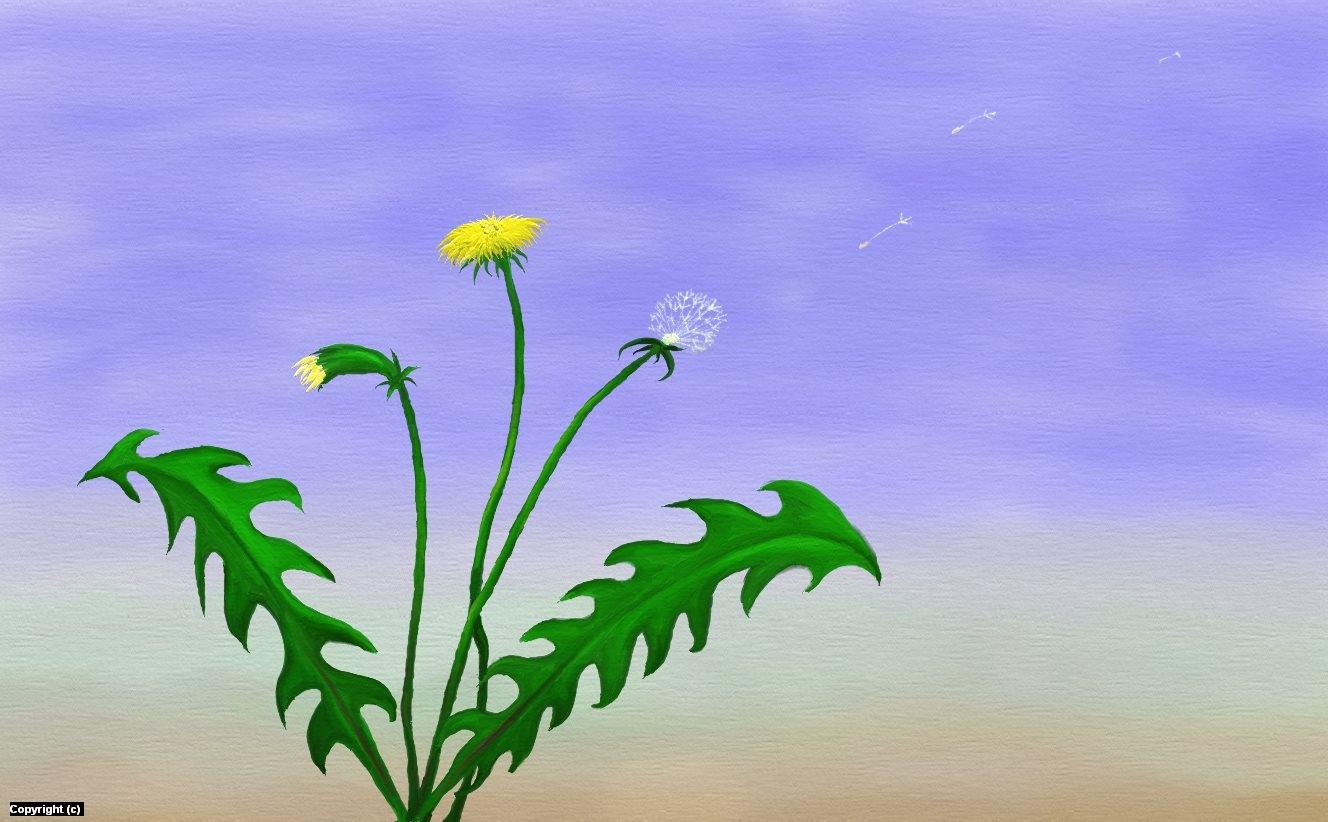 Dandelion Artwork by Janie Johnson