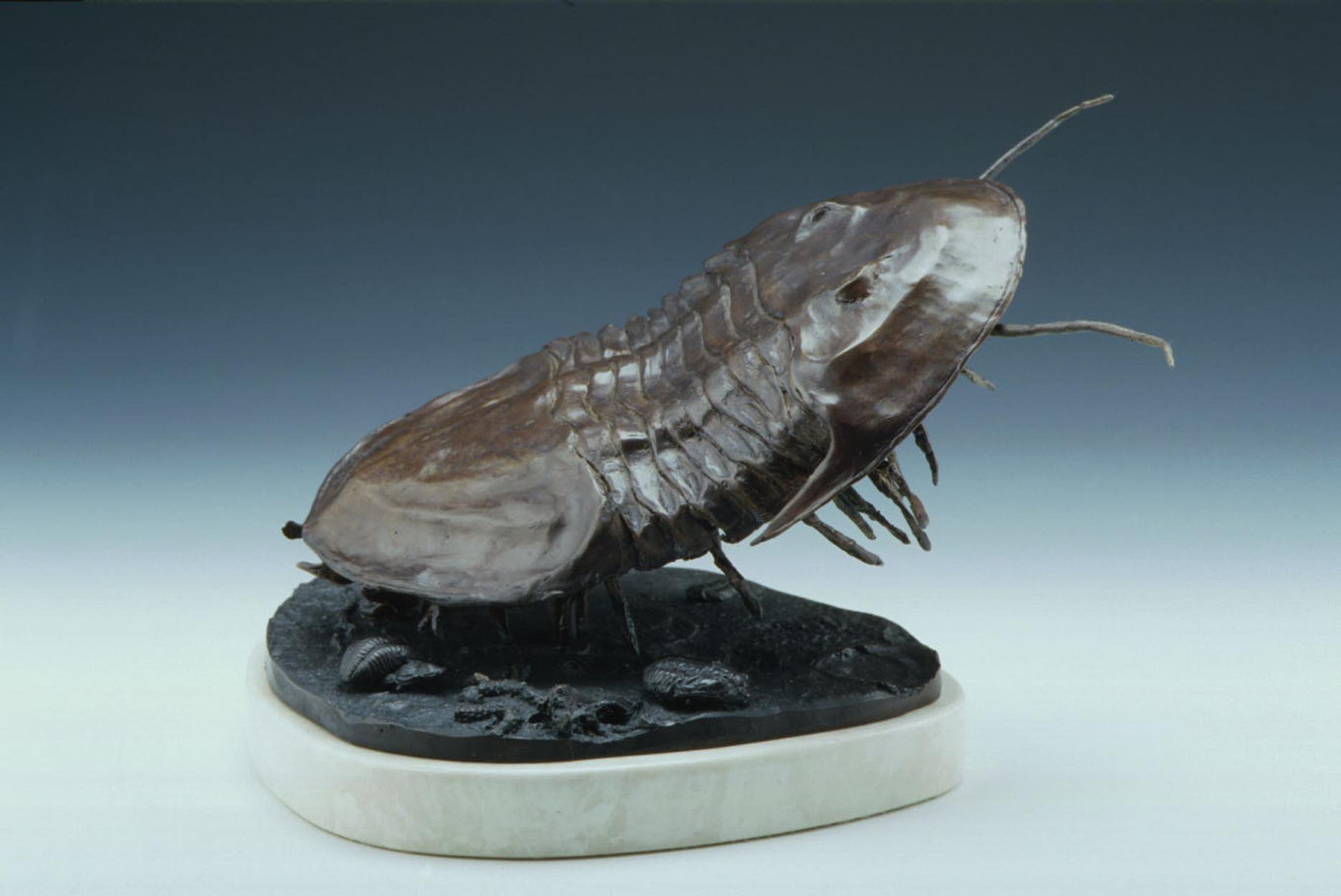 Isoteleus maximus, trilobite  (side view) Artwork by james herrmann