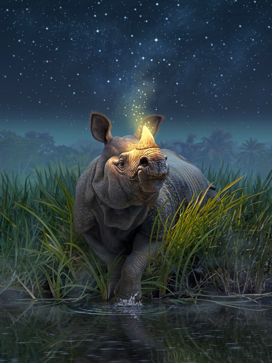 Rhinoceros Unicornis Artwork by jerry lofaro