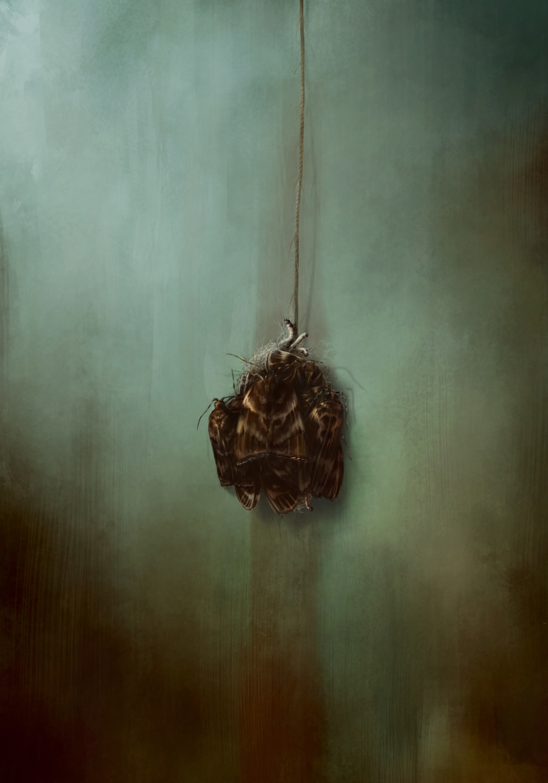 Moth Artwork by Norbert Birgány