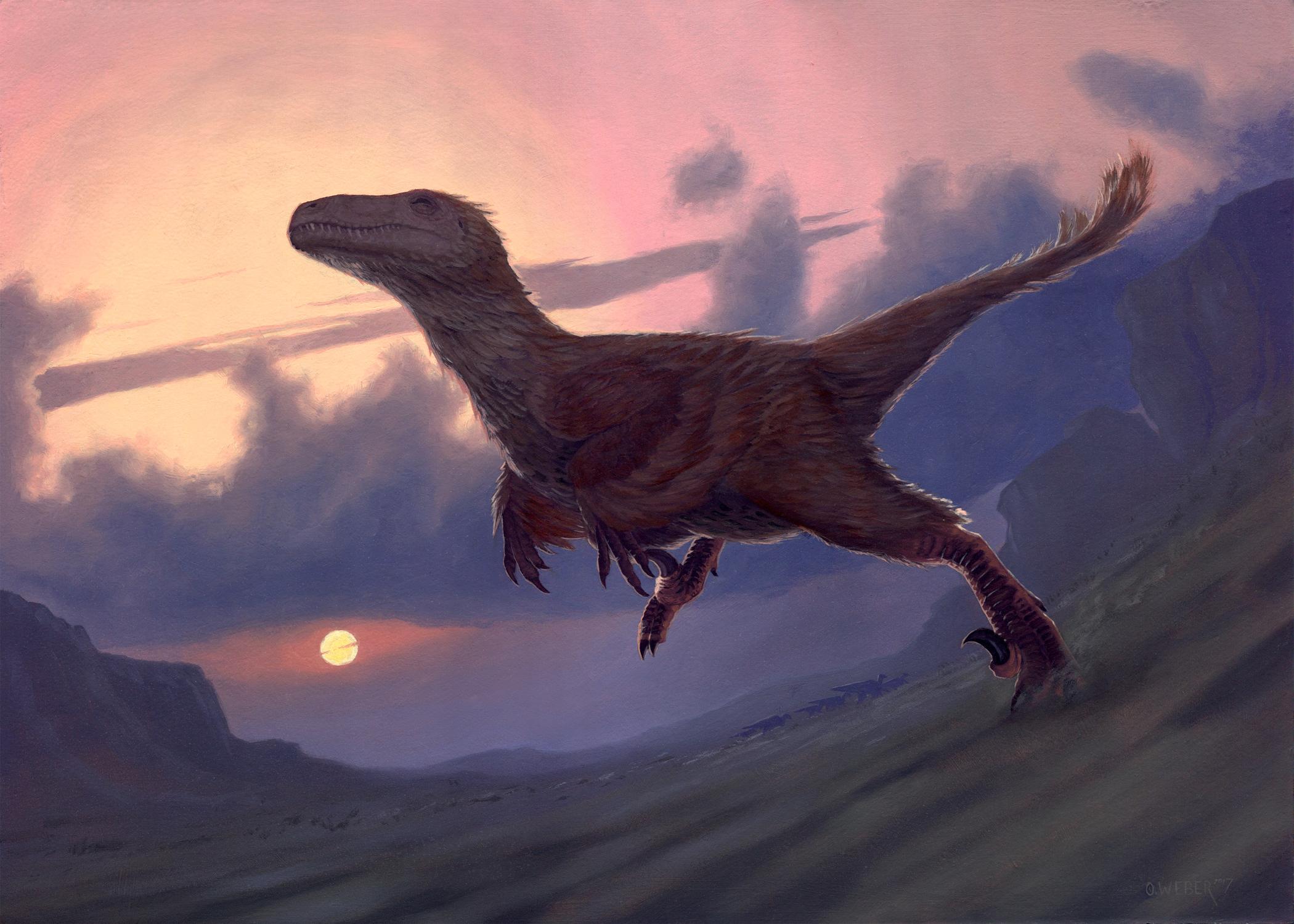 Utahraptor Artwork by Owen Weber