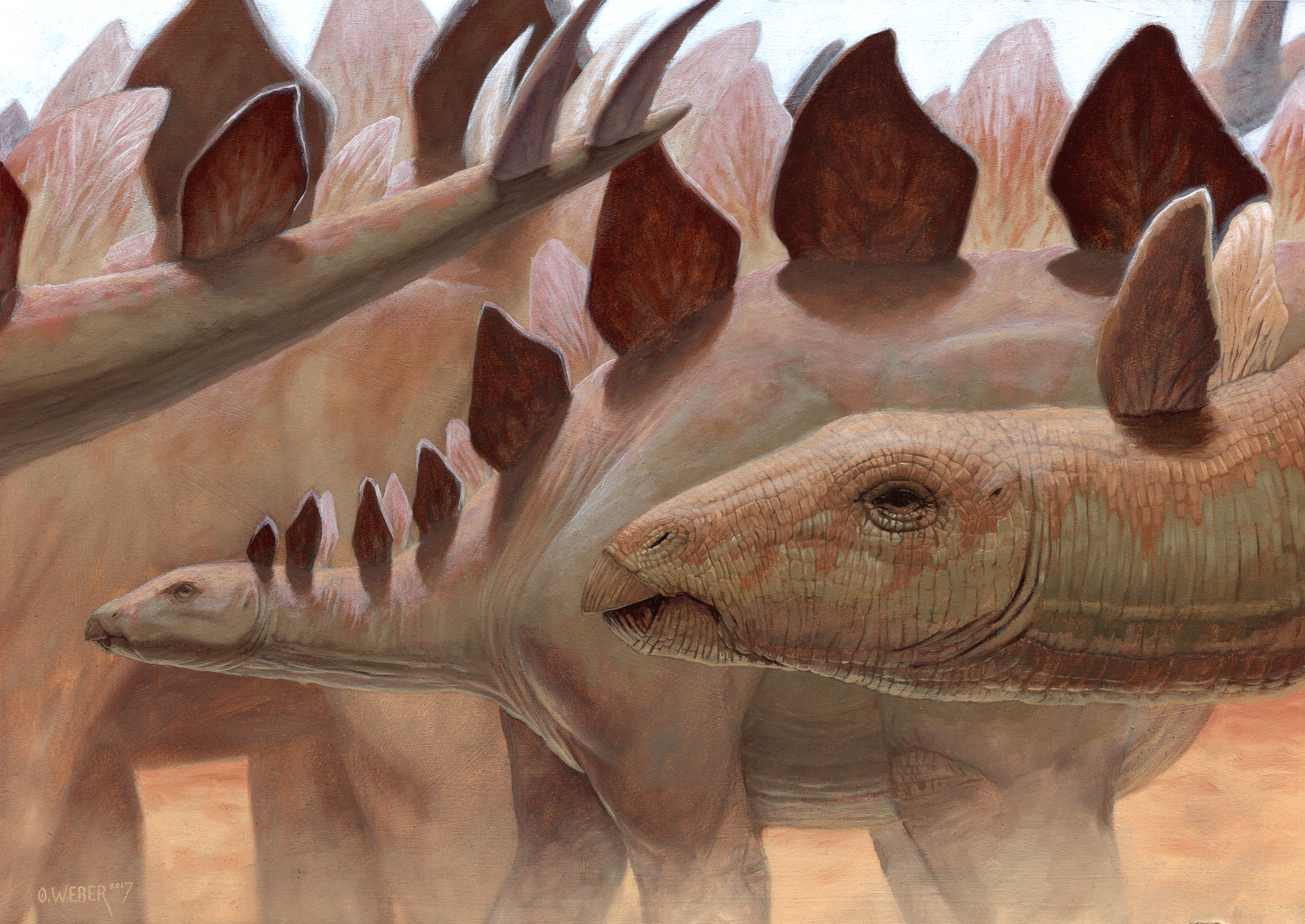 Stegosaurus Artwork by Owen Weber