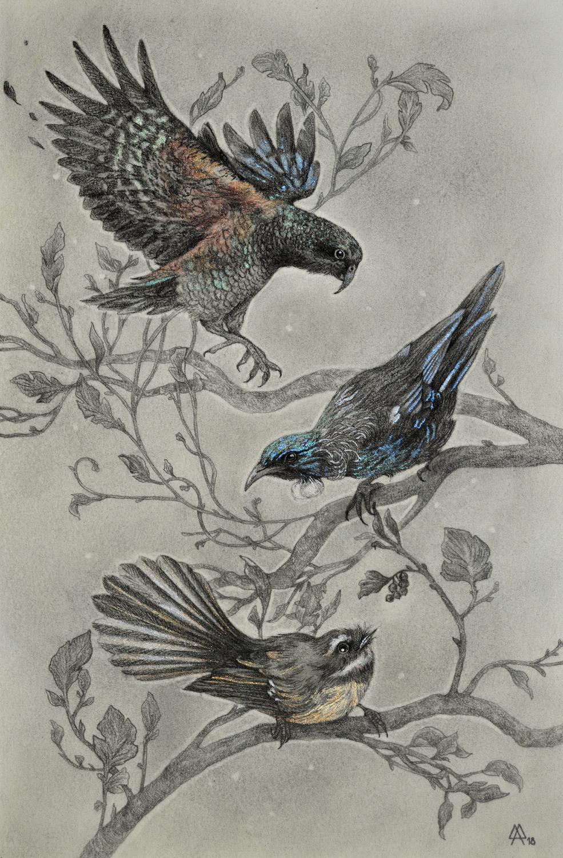 New Zealand Birds Artwork by Adeline Martin