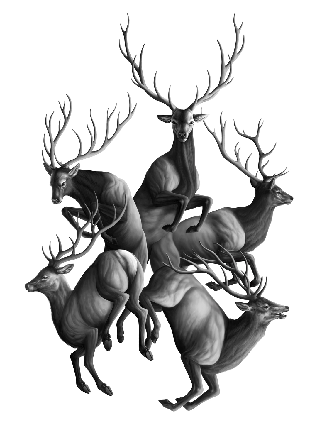 Stags Artwork by Shawn E Russell