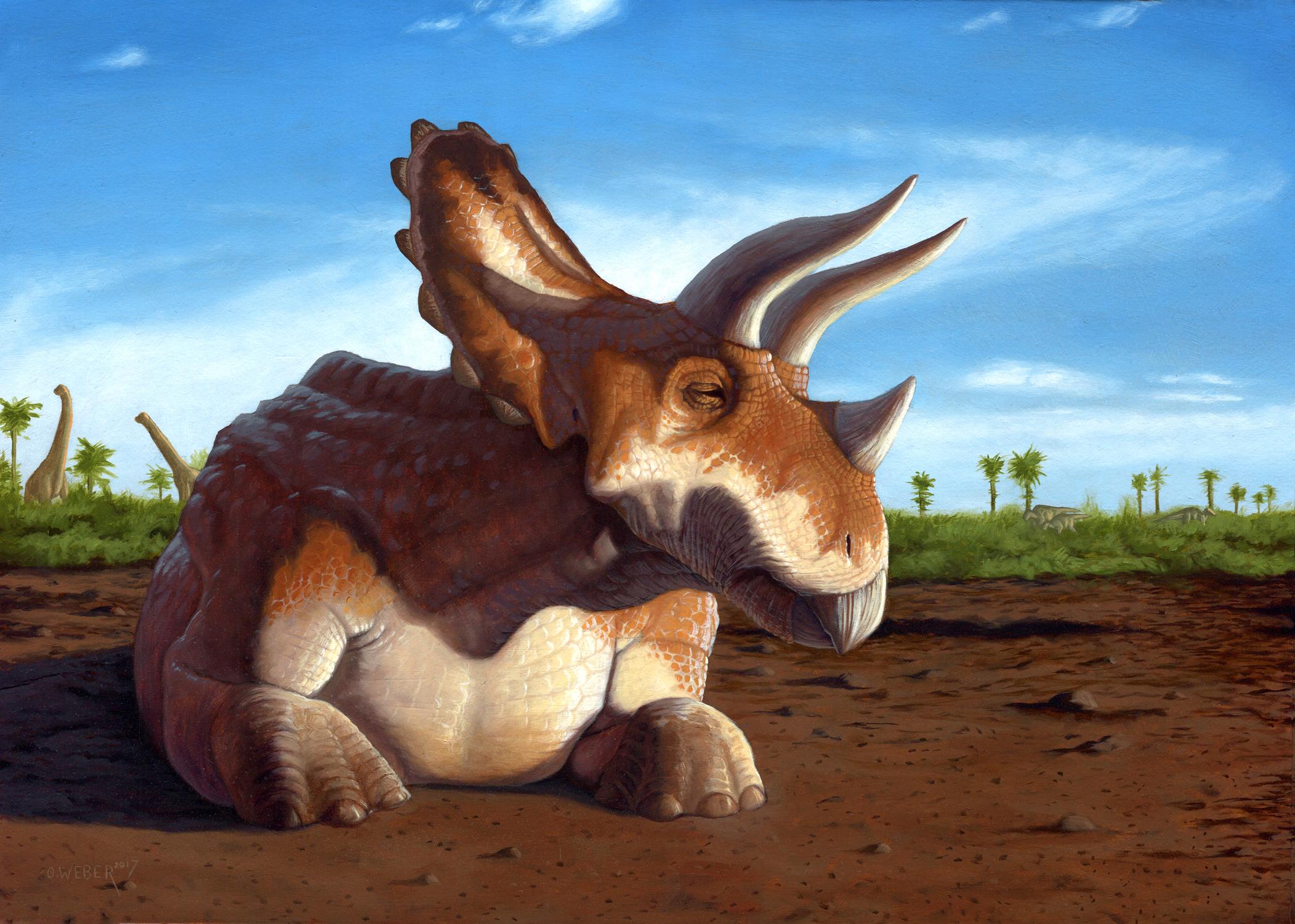 Triceratops Artwork by Owen Weber