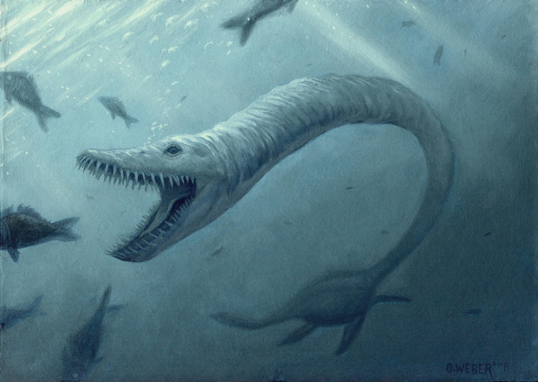 Elasmosaurus Artwork by Owen Weber