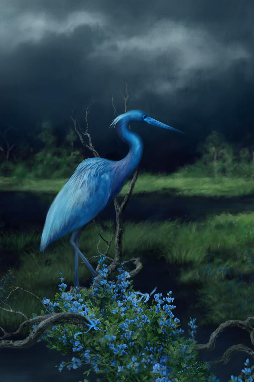 Indigo and Little Blue Heron Artwork by Jeszika Le Vye